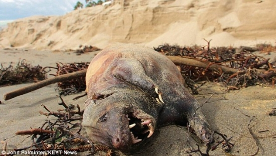 Hairless mystery creature baffles residents after it washes up dead on exclusive California beach