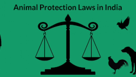 Protection of Animals under the Law